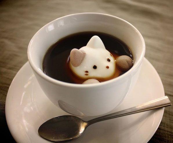 cat_latteart
