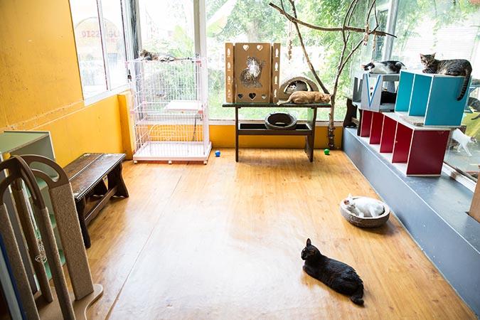 貓咪安置室