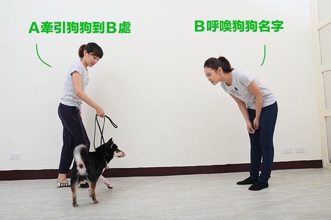 柴犬-喚回訓練-2