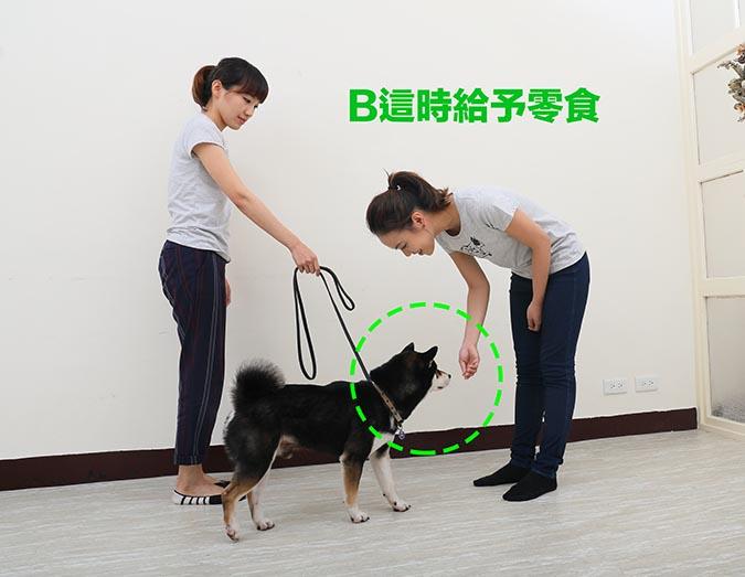 柴犬-喚回訓練-3