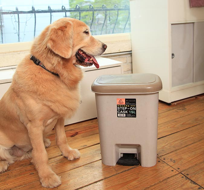 別讓狗狗把翻垃圾當尋寶-433