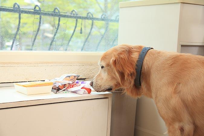 別讓狗狗把翻垃圾當尋寶-401