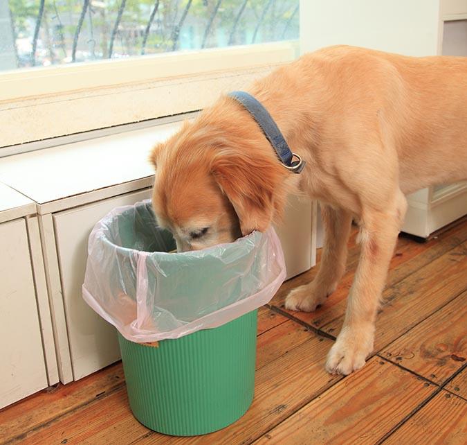 別讓狗狗把翻垃圾當尋寶-419
