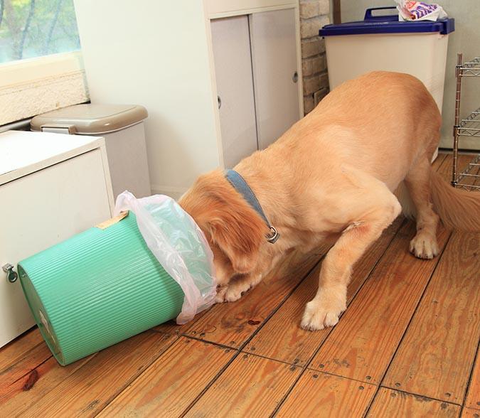 別讓狗狗把翻垃圾當尋寶-423