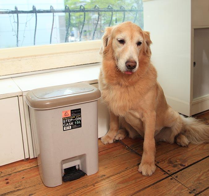 別讓狗狗把翻垃圾當尋寶-428
