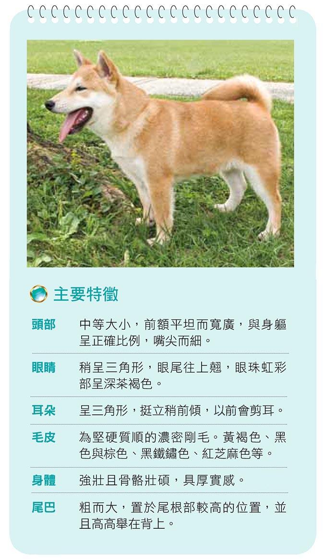 柴犬主要特徵1