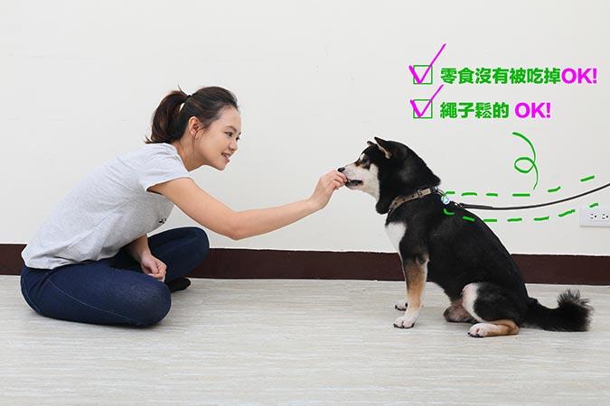 柴犬等待訓練-03