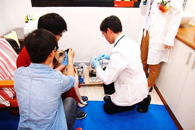 屏東科技大學獸醫輸血醫學中心-首隻捐血犬neo,捐