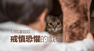 13-cats-behavior-described