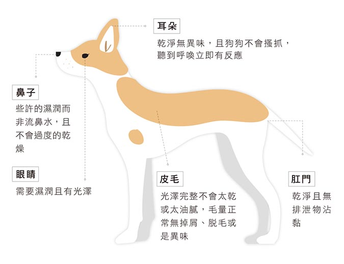 mix-dog-health-003