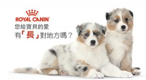pets-can-eat-human-food-during-the-chinese-new-year