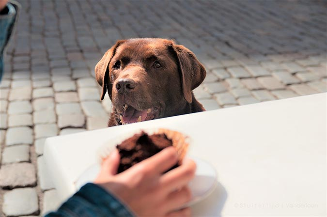 人沒吃完的飯菜分給狗狗吃一些應該沒關係