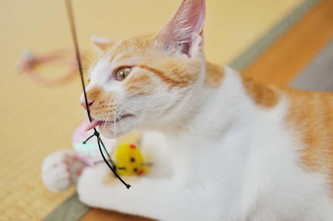 貓咪異嗜癖-5