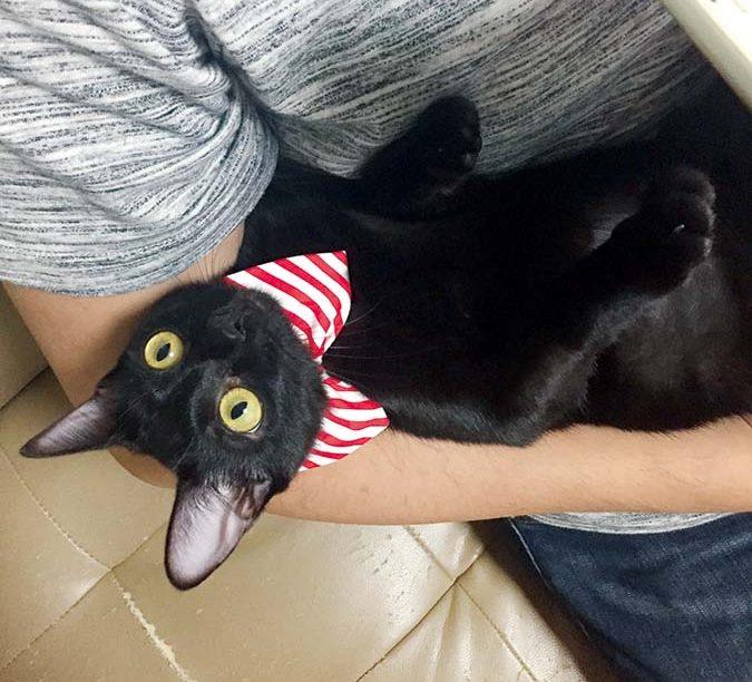 1貓托邦-2