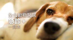 2018-taiwan-veterinary-hospital-er