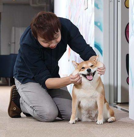 柴犬nana-6