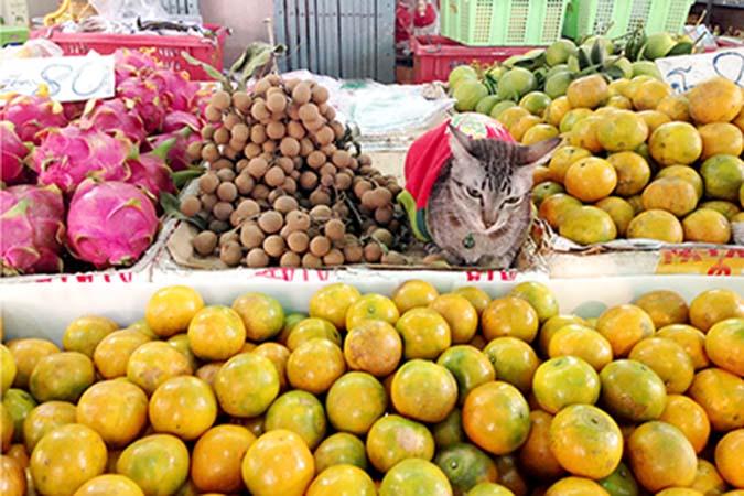貓飲食迷思top10-14