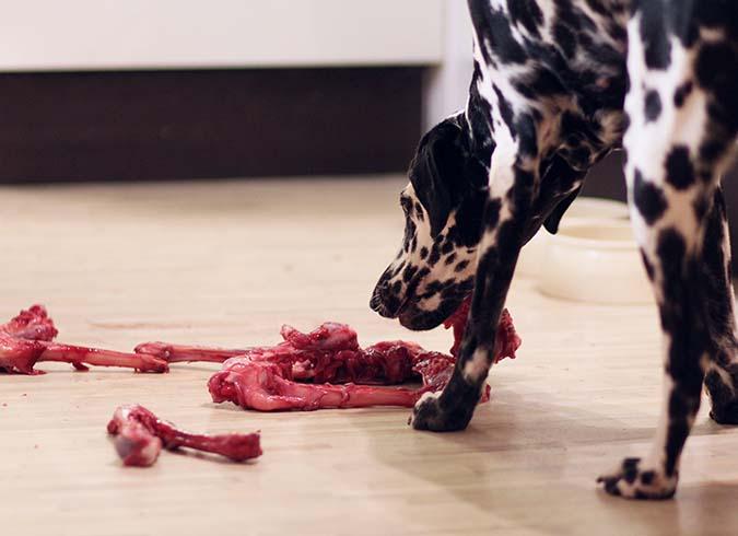 狗飲食迷思top10-6