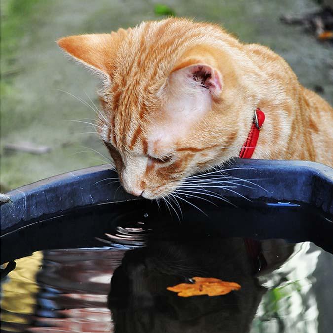 貓飲食迷思top10-10