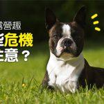 web_banner_0724_狗狗露營趣_哪些危機要注意