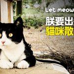 web_banner_0801_貓咪散步去