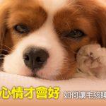 web_banner_0904_如何讓毛孩睡得安穩