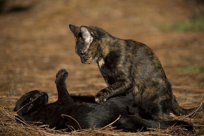 kittenbite1