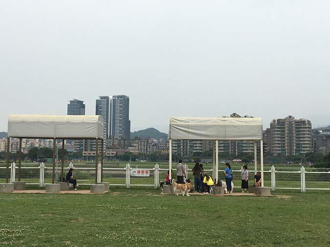 1-寵物公園評比-迎風-3重點在遮陰處