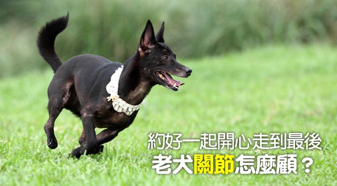 1022_沅慶_老犬關節