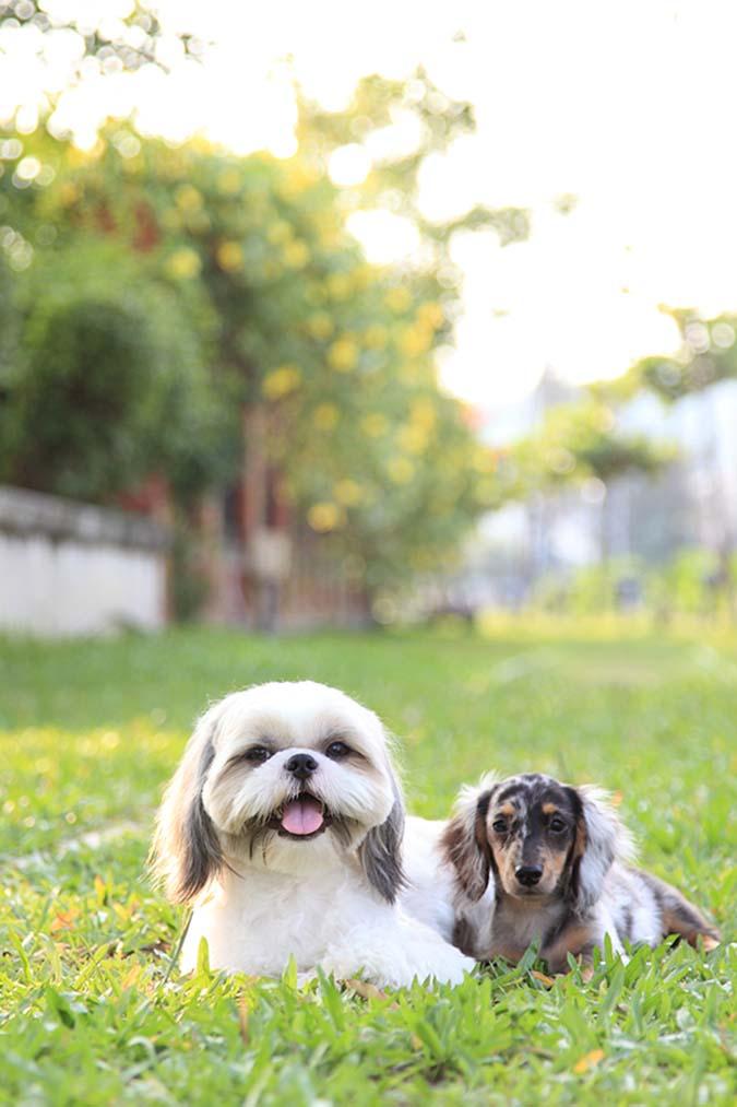 2-寵物拍照-上-5