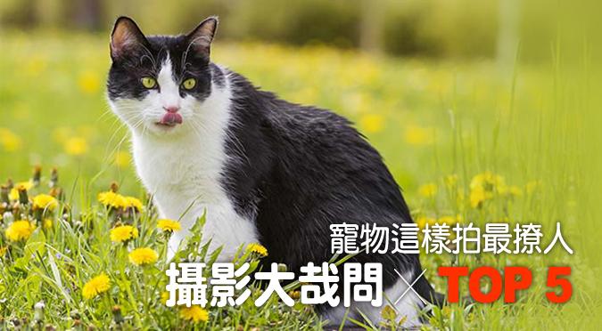 web_banner_1107_寵物攝影