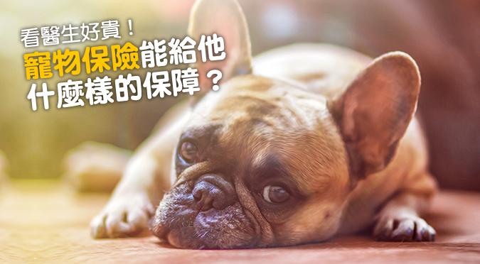 web_banner_1108_寵物保險