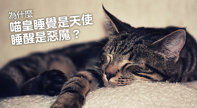 web_banner_1113_貓皇惡魔