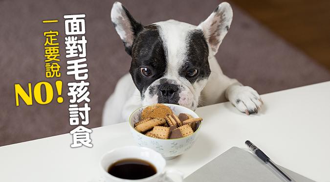 web_banner_1120_毛孩討食要說no