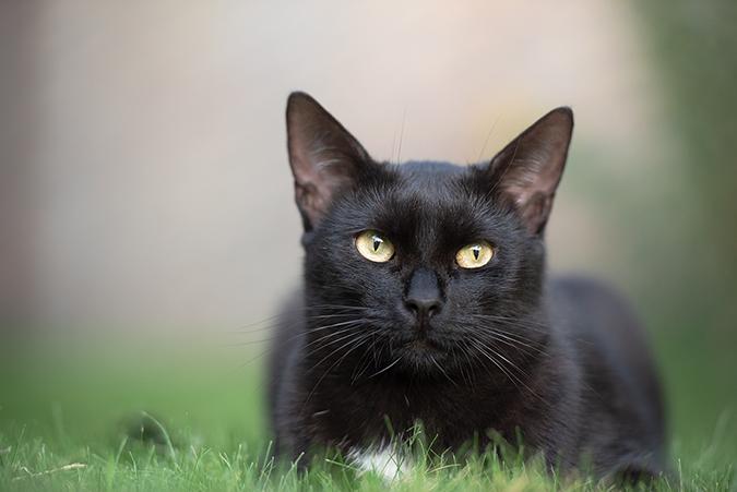 catsit1