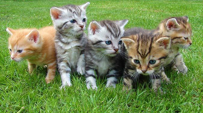 1全台友善貓科醫院-3