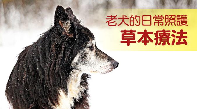 web_banner_0108_老犬的日常照護草本療法