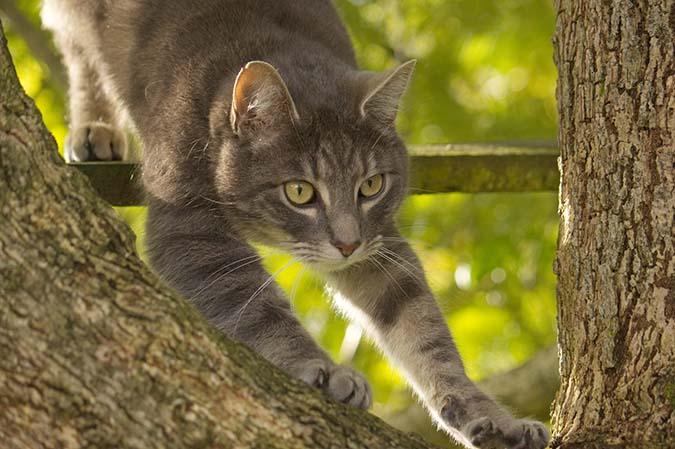 2-貓咪發情-1