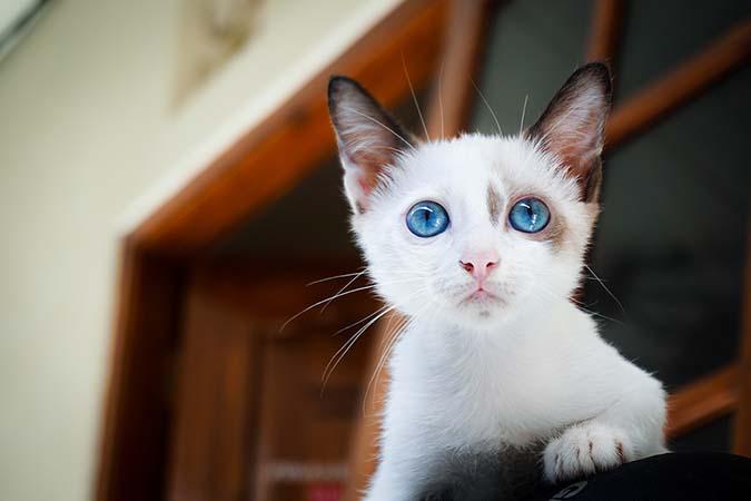 03-奶幼貓-1