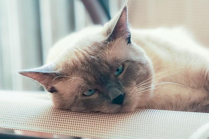 pet-home-euthanasia2
