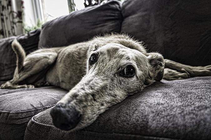 pet-home-euthanasia3