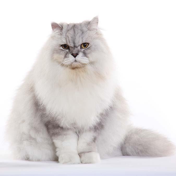 1-胖貓-1