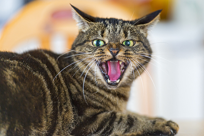 cat-stress1