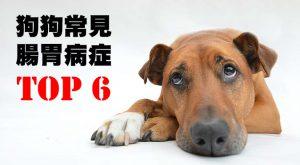 狗狗常見腸胃病症Top 6