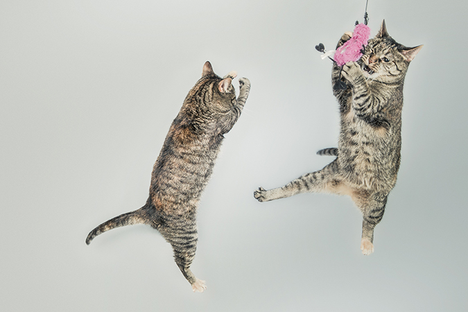 cat-play4