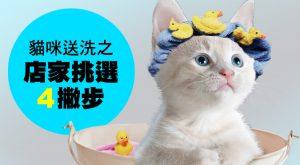 貓咪送洗之店家挑選4撇步