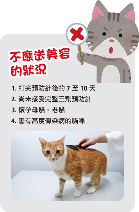web_banner_0722_貓咪送洗之店家挑選4撇步_2