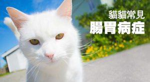 貓貓常見腸胃病症