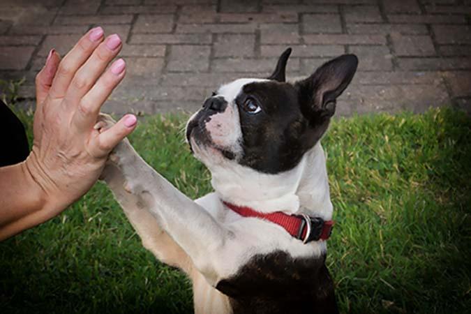 dog-3555375_1920