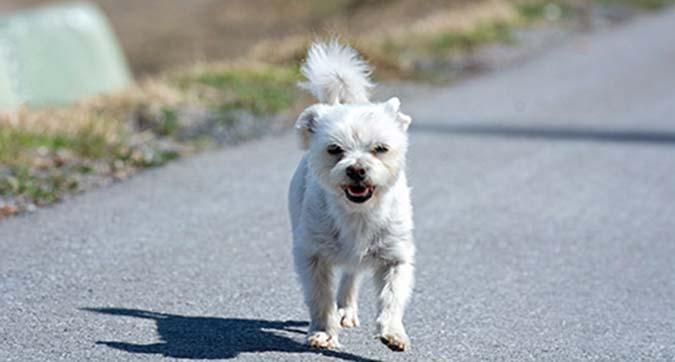 dog-4134853_1920